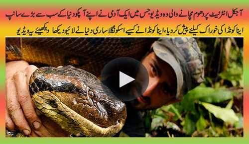 Paul Rosolie Fails To Get 'Eaten Alive' by Giant Anaconda in Discovery Channel Stunt