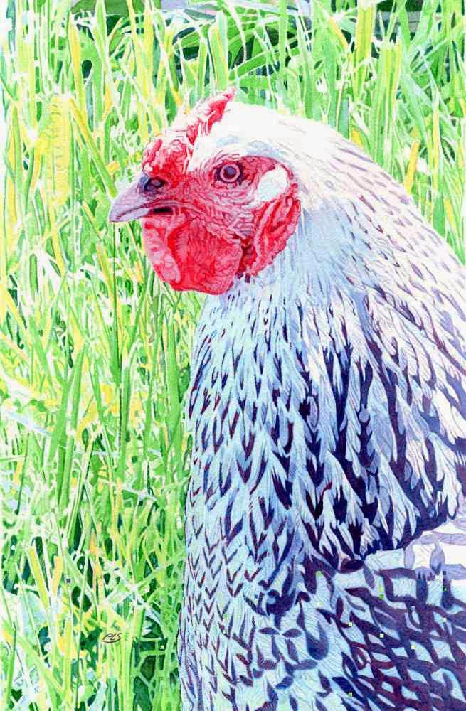 Monhegan Black-and-White Hen