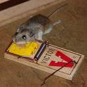 Diệt chuột