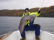 havskatt 7950g (Saltstraumen Norge)