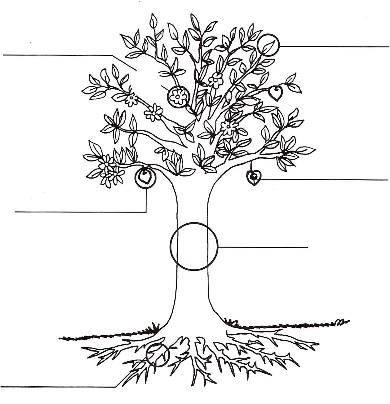 Planta para colorear con sus partes - Imagui