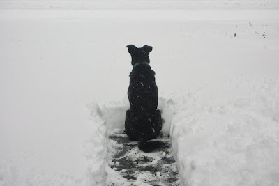 My dog Lady surveying thick snow in driveway and street.