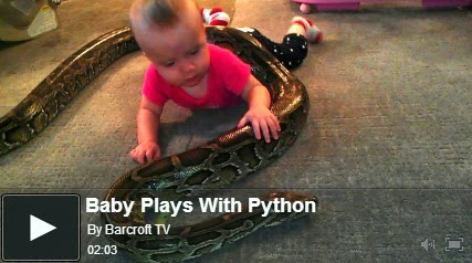 http://funkidos.com/videos-collection/amazing-videos/baby-plays-with-python