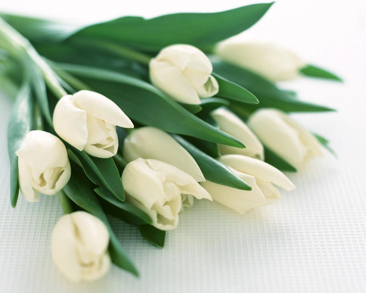 Написать поздравления с 8 марта учительнице 142
