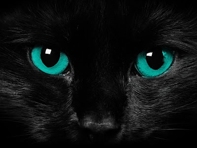 Black Cat Blue Eyes Cat Wallpaper