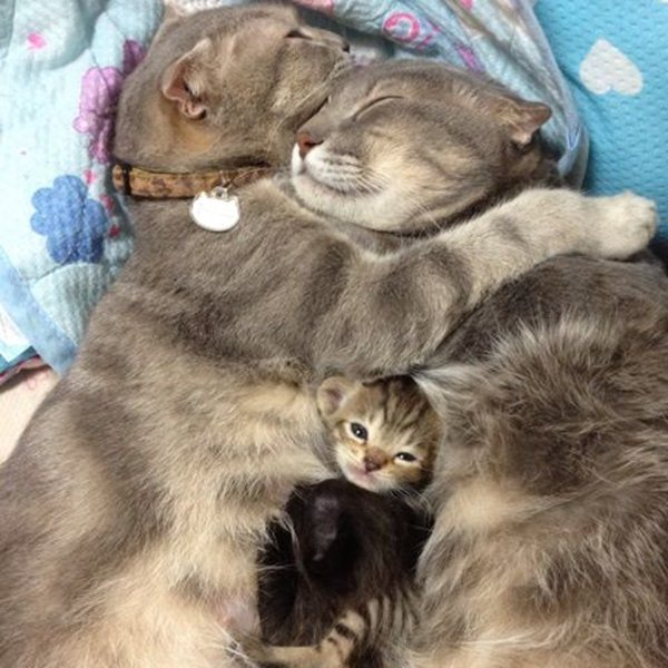 funny animal pics, animal photos, cat family