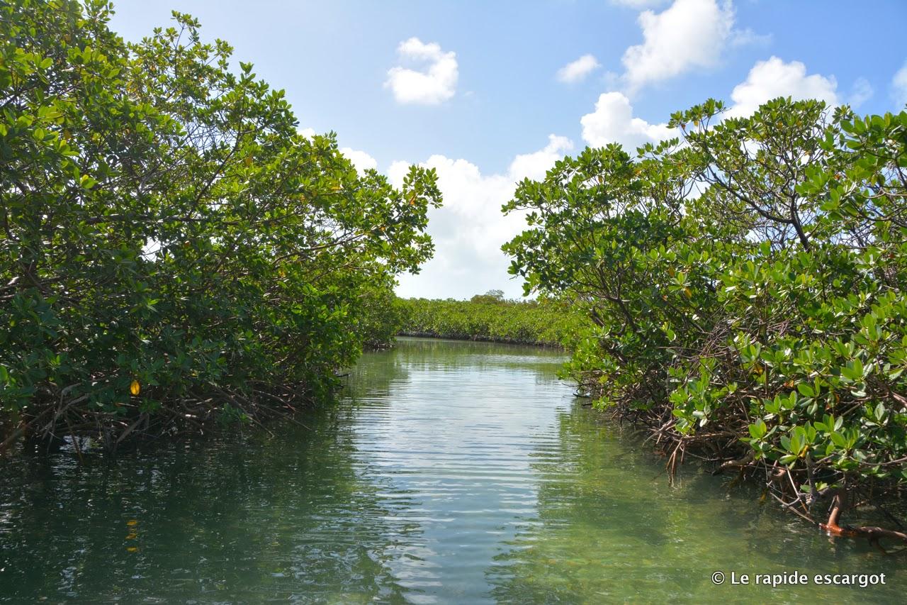 mangrove long island