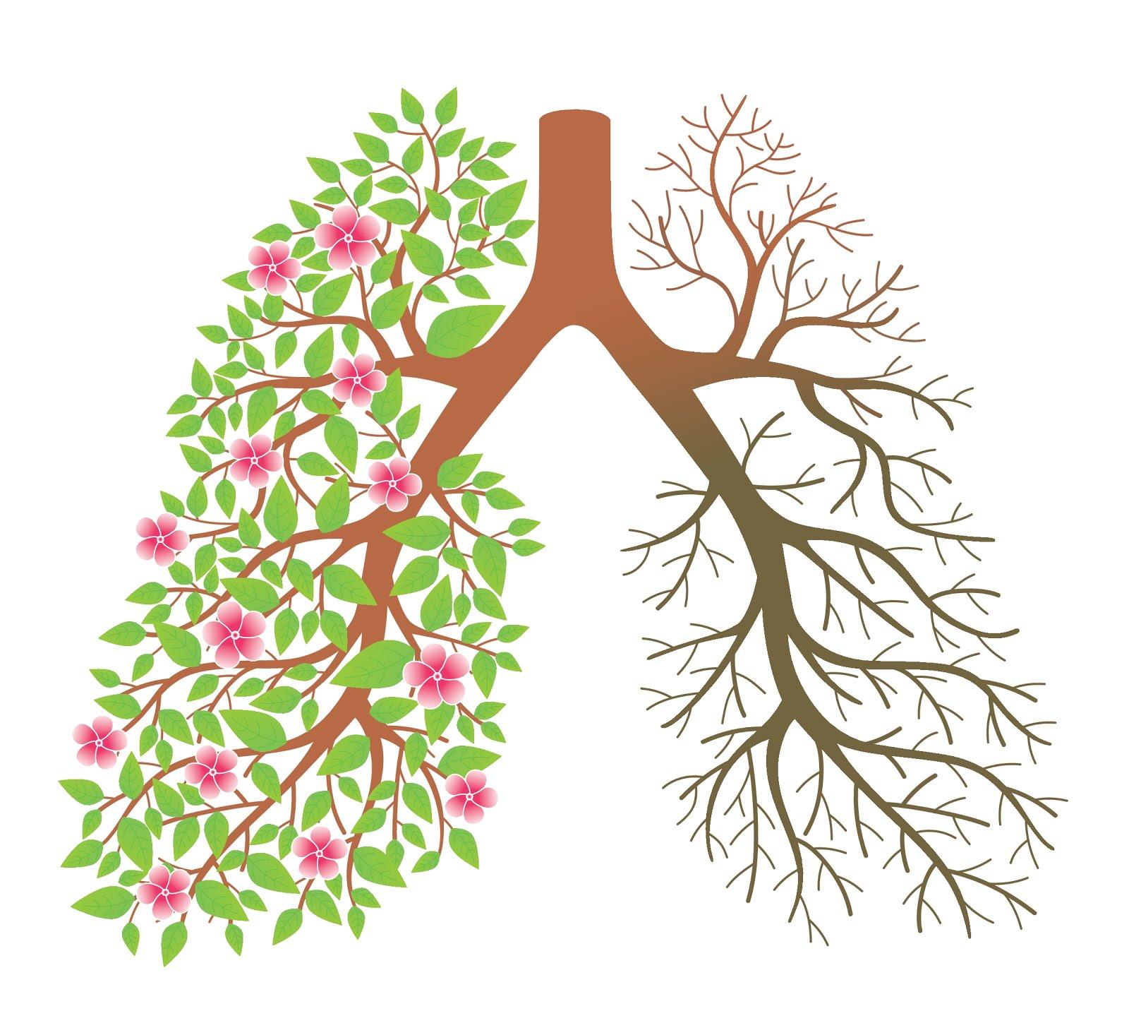 kol lunger