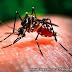 Kenali Virus Zika Lebih Dalam