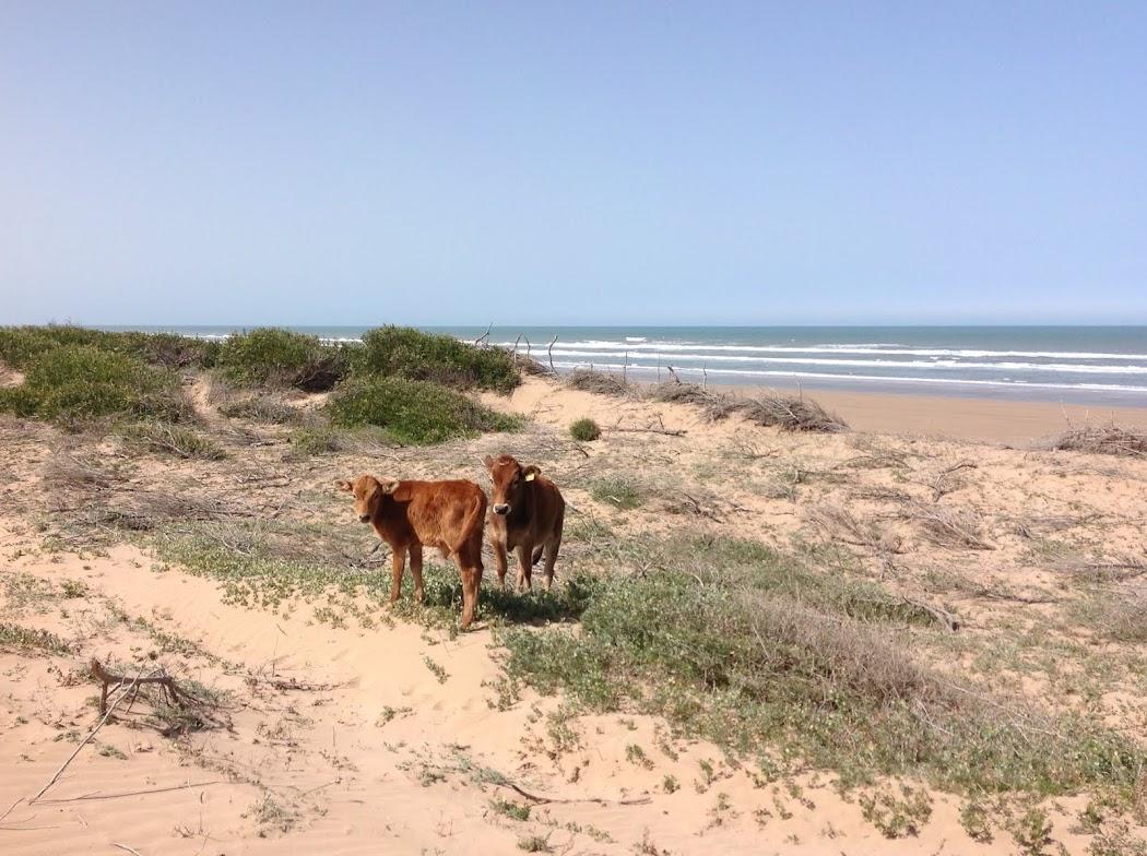 plage naturelle d'Essaouira