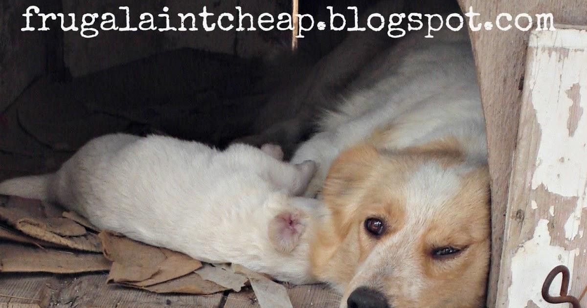 Frugal Ain T Cheap Pet Safe Flea Control