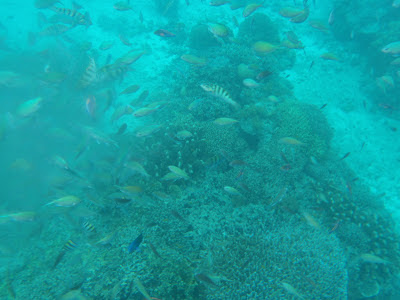 balicasag island  fish sanctuary
