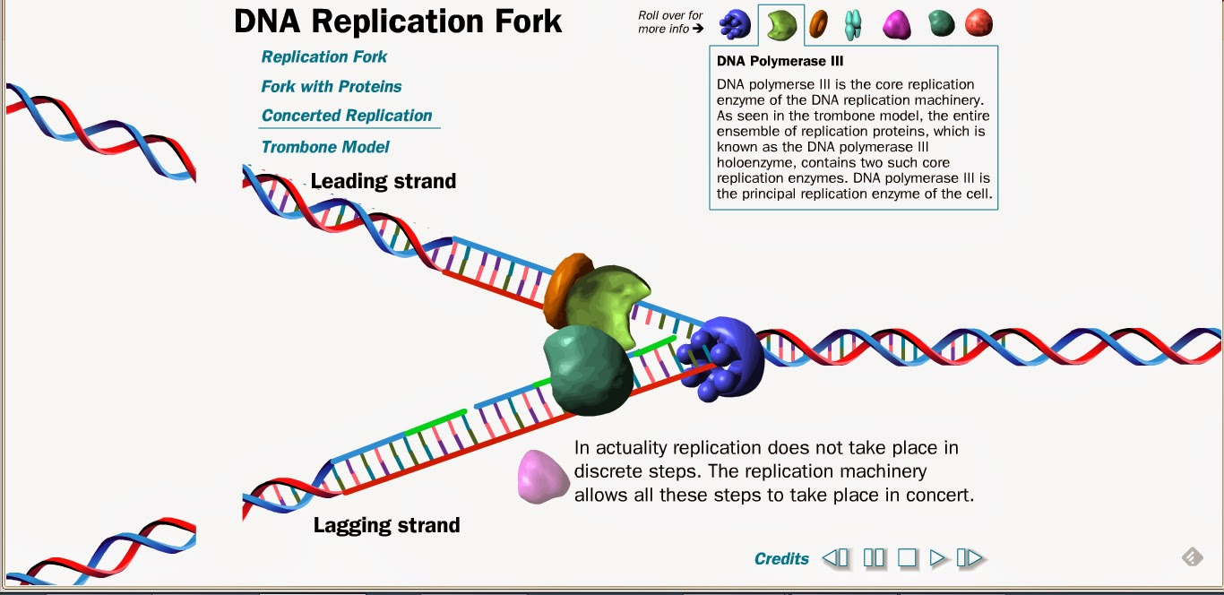 diagram the process of dna replication diagram 9 3 4 2 1 describe the process of dna replication and explain its significance relationship