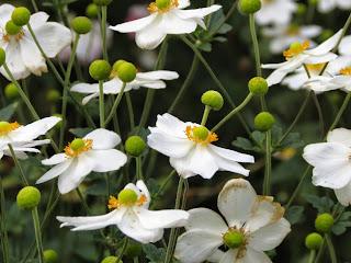 Cuarenta y tres flores y botones