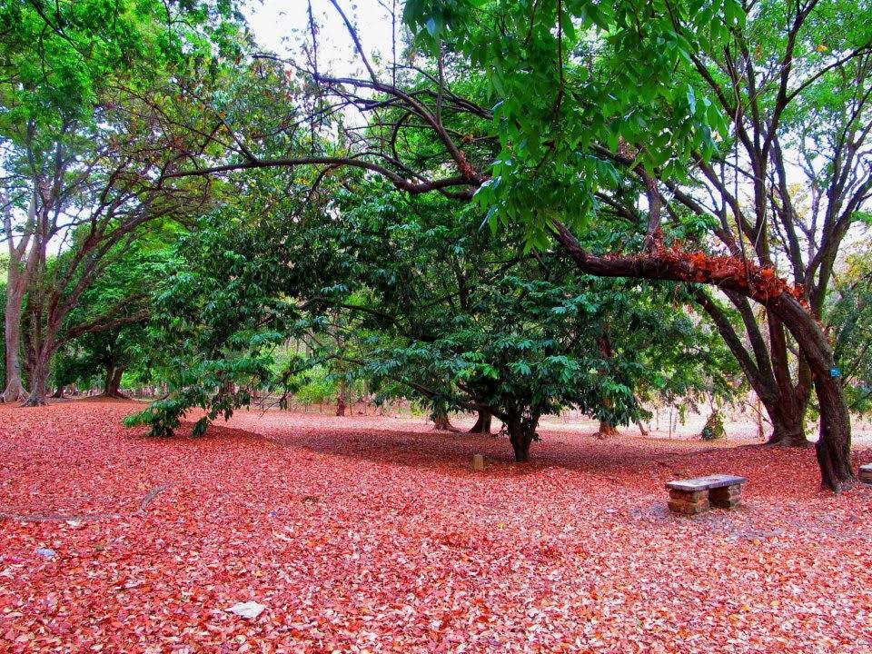 Kebun Raya Purwodadi, kebunrayapurwodadimalang.blogspot.com, 085791320238