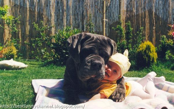Big dog and baby.