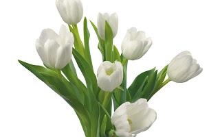 Ramo de calas Fotos de flores blancas