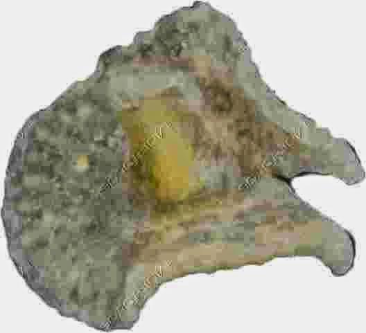 Dendrogramma-micro1