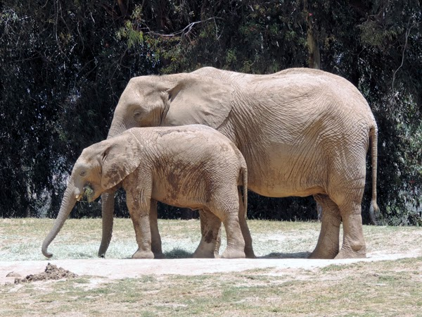 Oma's version of the iconic Mother's Day photo – Mom and Baby Elephant.