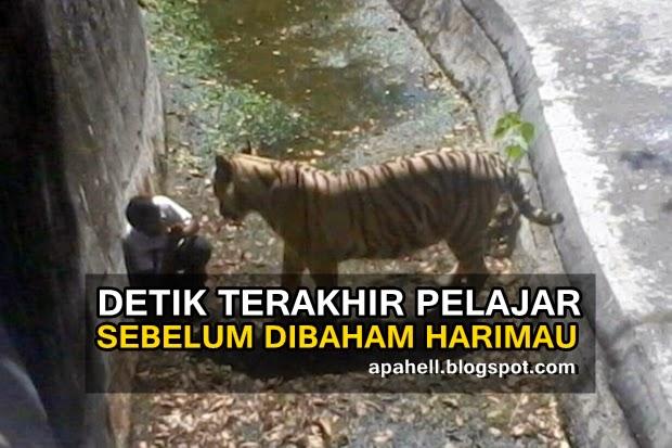 Video : Rakaman Saat Harimau Membaham Seorang Pelajar di India