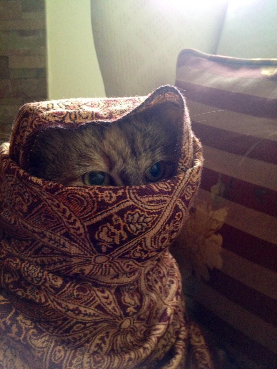 Сумасшедшие коты, фото 29