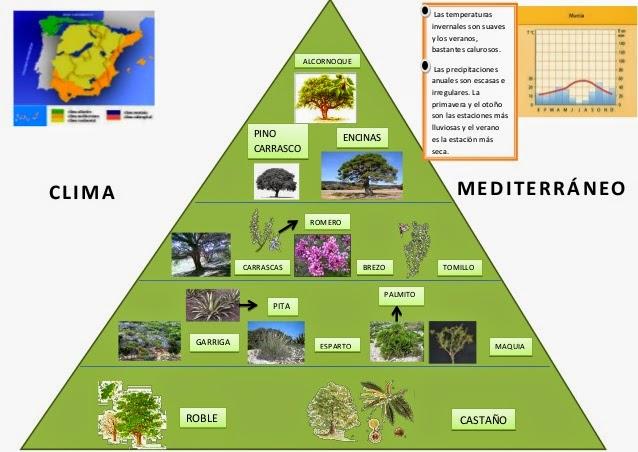 Blog de ciencias sociales clima mediterr neo for Clima mediterraneo de interior