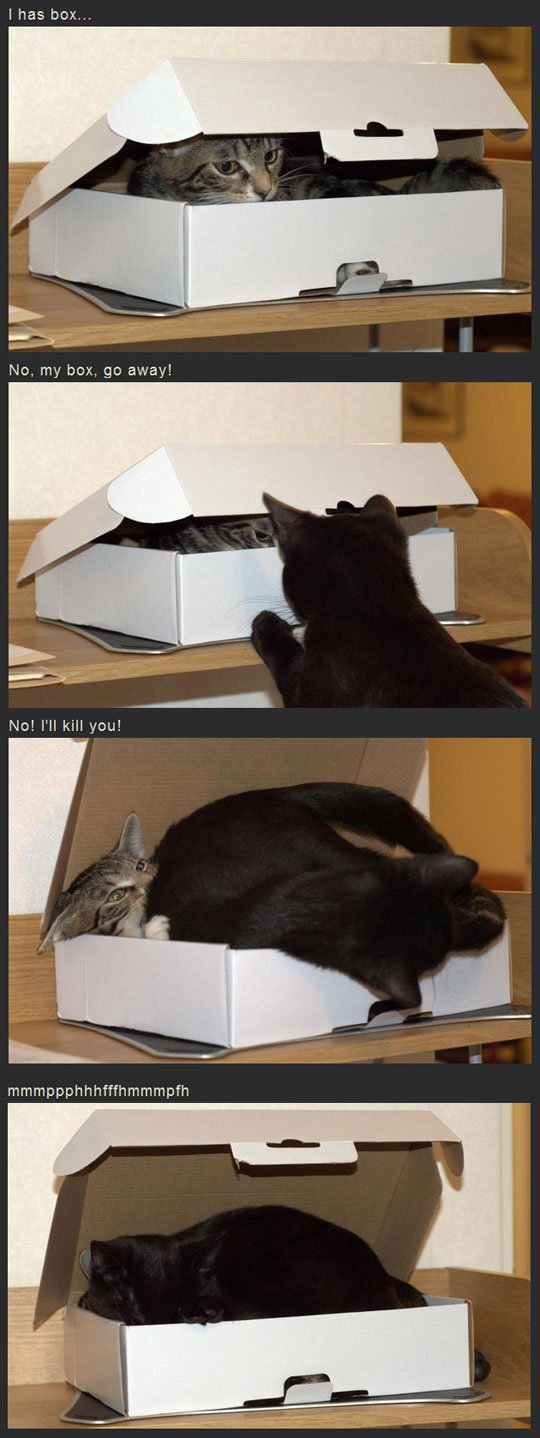 I Has Box (Cat)