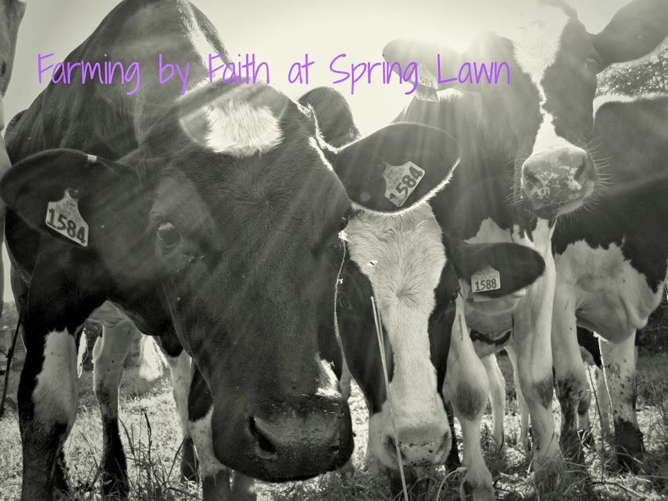 Farming by Faith at Spring Lawn