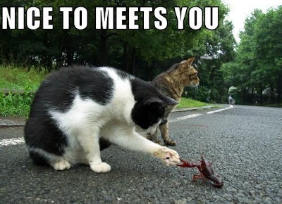 NICE TO MEET YOU cat