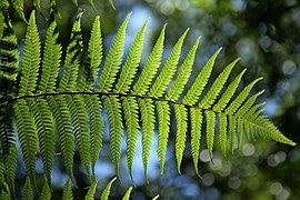 Permalink ke Organ Pada Tumbuhan Dan Fungsinya
