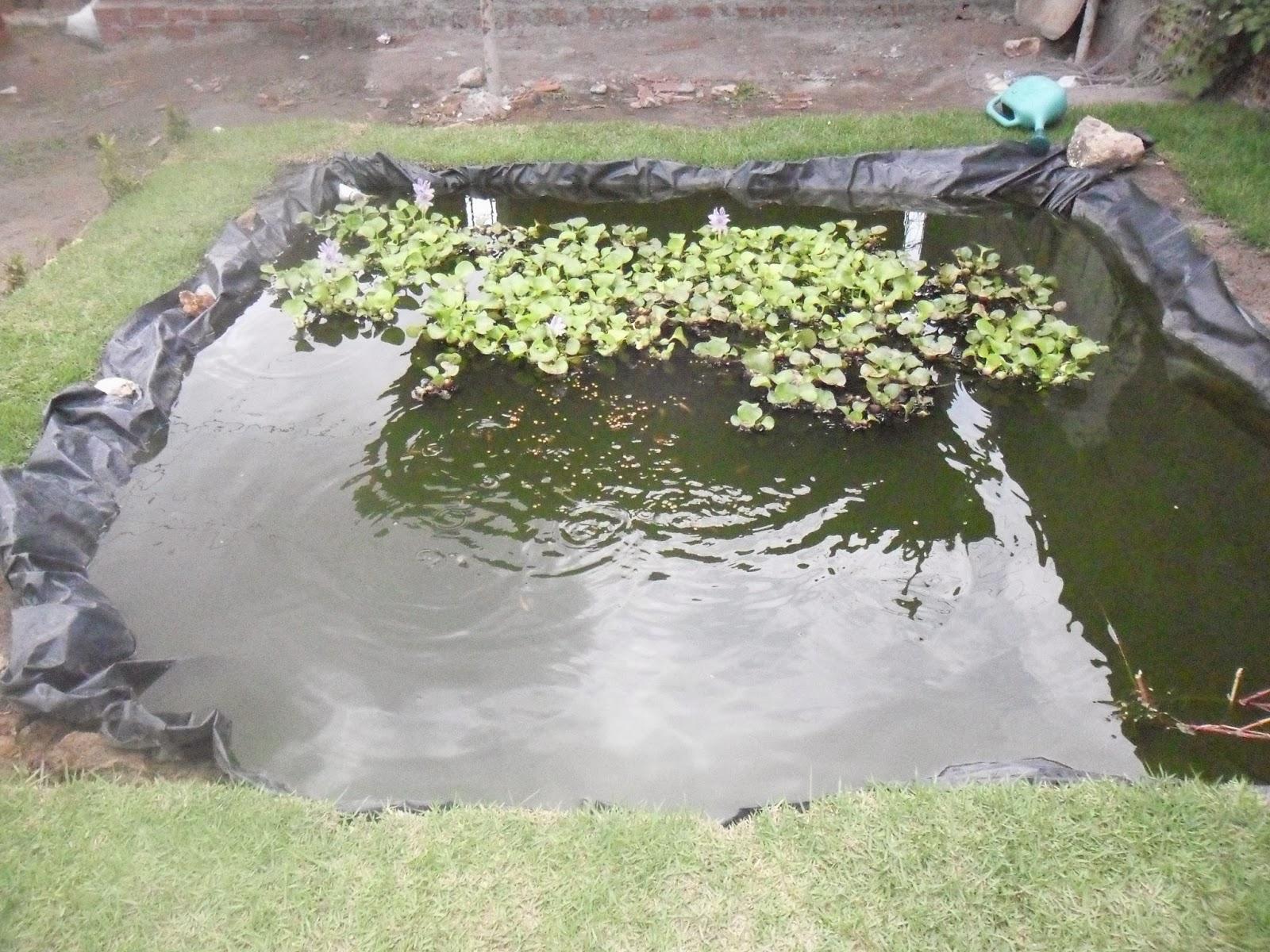 Cria o de tambaqui e til pias em tanques de lona brasil for Tanques para cria de tilapia
