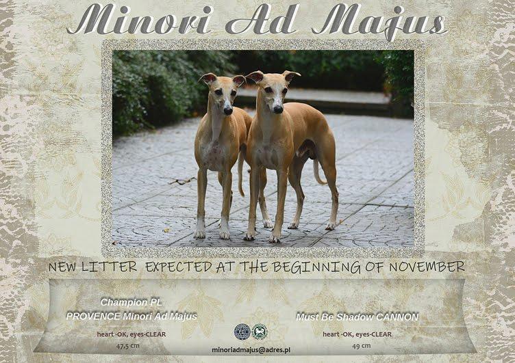 whippety Minori Ad Majus