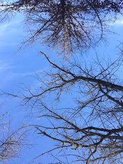 Son las copas de árboles, de fondo el cielo azul, hermoso.