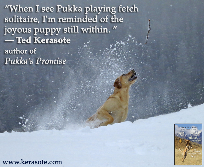 Brooks here A while back Mom reviewed the beautiful book Pukka the Pup After Merle. Many of you may be familiar with Merleu0027s Door the inspiring ...  sc 1 st  The Writeru0027s Dog & The Writeru0027s Dog: Brooksu0027 Books- Hereu0027s a Dog Who Loves a Healthy Life