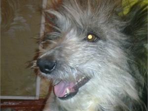 Живодеры избили и закопали живьем собаку