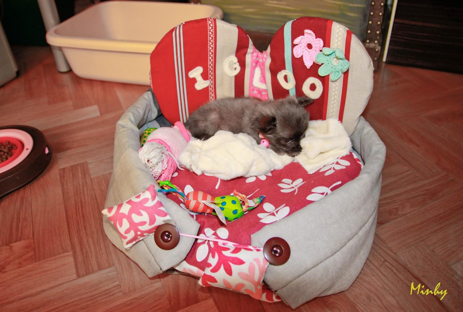 minhylie petit panier pour mon chihuahua. Black Bedroom Furniture Sets. Home Design Ideas