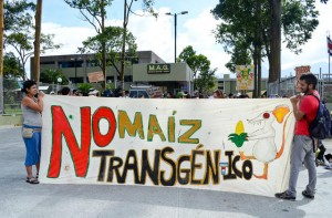 Monsanto Back at it Again in Costa Rica with GM Corn