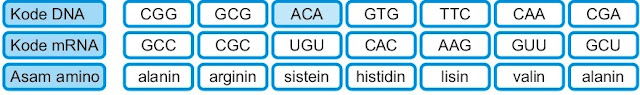 Duplikasi nukleotida Gen normal