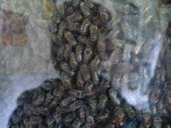 Bienenfleiß