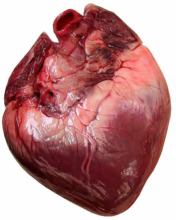 SALUD Y MEDICINA: Regeneración Cardíaca con Células Madres