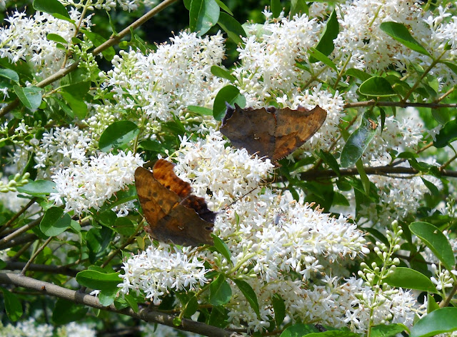 Side view of butterflies at Dixon Branch Creek, White Rock Lake