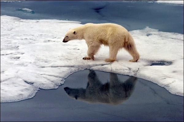 Ártico, petróleo,