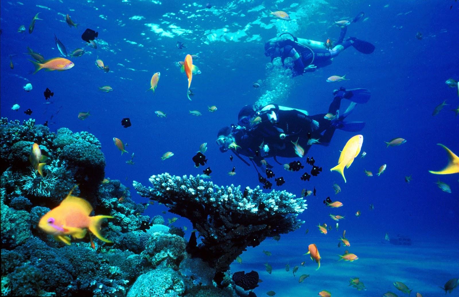 Shasa resort residences koh samui top 5 diving sites in koh samui - Dive in koh tao ...