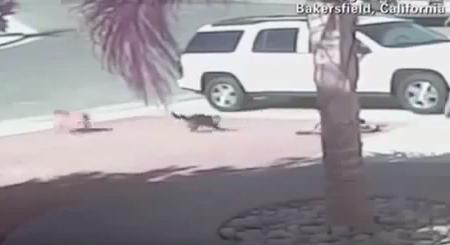 niño es salvado por su gato de un perro