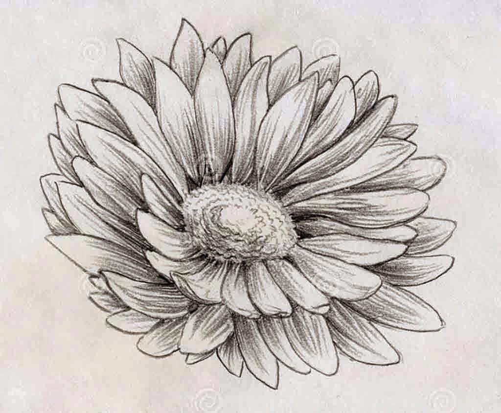 Top 13 Flowers Sketches - Beautiful Sketching Flowers