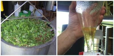 Niche distillation at Dr. Wendy Maddocks-Jenning's farm