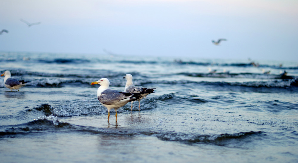 море и чайки картинки