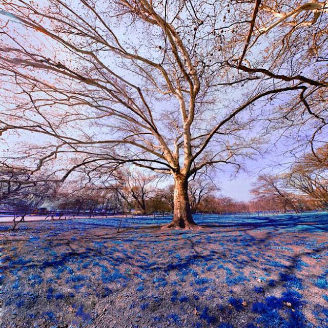 Smashing Trees Photography