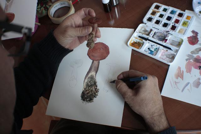 Cartel del Taller de Ilustración Micológica en el centro de Visitantes Viñas de Peñallana PN Sierra de Andujar Diego Ortega Alonso