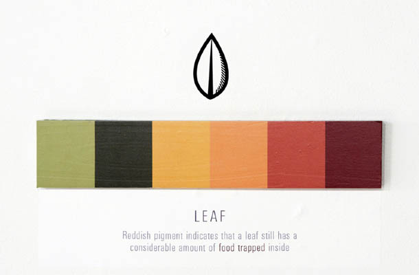 Shades of Change - Marin Dearie - Leaf
